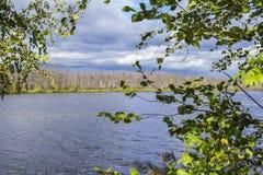 Le jaunissement encadré par lac brouillé de forêt de fond part par temps nuageux Images stock