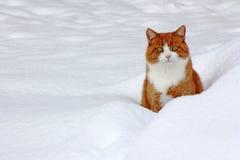 Le jeu dans la neige donne le plaisir Image libre de droits