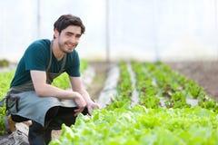 Le jeune agriculteur attirant vérifient le progrès de la culture Images stock