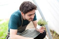 Le jeune agriculteur attirant vérifient le progrès de la culture Photographie stock