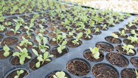 le jeune bébé plante l'élevage dans l'ordre de germination sur le soi fertile Image stock