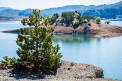 Le jeune bois du pin sur le fond éloigné d'île chez l'Aoos jaillit lac dans le Metsovo dans Épire Photographie stock libre de droits