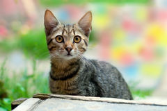 Jeune chat Photo libre de droits