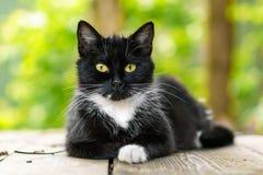 Le jeune chat se trouve sur une plate-forme en bois image stock