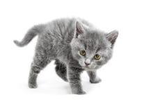 Le jeune chat sont en position de défense et préparent pour attaquer Photos stock