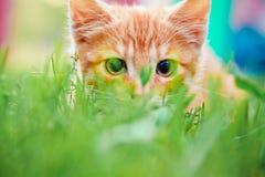 Le jeune chaton chasse sur l'herbe verte Images stock