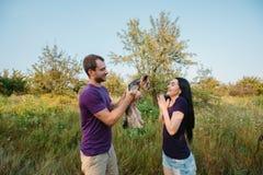 Le jeune couple heureux sur la nature, le garçon donne à fille un chien - terrier de Yorkshire comme cadeau Photographie stock libre de droits