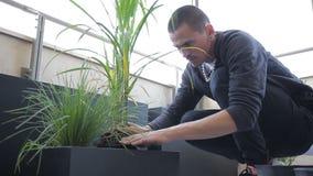 Le jeune cultivateur libère la plante verte du pot et met dans la boîte en serre chaude banque de vidéos