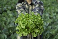 Le jeune exploitant agricole tient le chêne vert végétal, technologie futée moderne organique de ferme d'eco hydroponique photo stock
