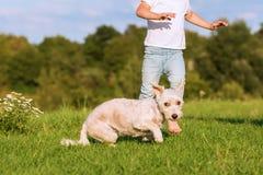Le jeune garçon joue avec un hybride de terrier dehors Image libre de droits
