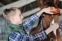 Le jeune garçon toilette le cheval Photos libres de droits