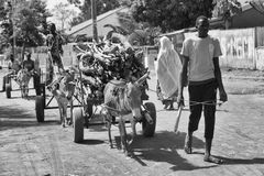 Le jeune homme africain porte le bois de chauffage Image libre de droits