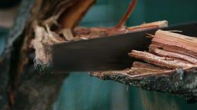 Le jeune homme dans le chapeau scie la branche sur l'arbre pendant l'été Fin en bois de sawing  banque de vidéos