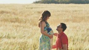 Le jeune homme embrasse son épouse dans le ventre, se mettant à genoux en été chaud dans un domaine de blé banque de vidéos
