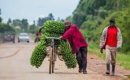 Le jeune homme est chanceux en la bicyclette sur la route par grand enchaînement des bananes à vendre sur le marché Image libre de droits