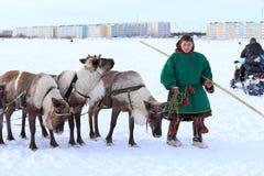 Le jeune homme l'éleveur de renne avec des rennes Images libres de droits