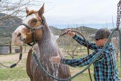 Le jeune homme nettoie son cheval après un tour de cheval près d'Aguanga, CA, photographie stock