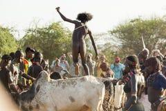 Le jeune homme saute des taureaux Turmi, vallée d'Omo, Ethiopie Image stock
