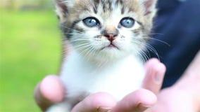 Le jeune homme tient un petit chaton dans des ses mains clips vidéos