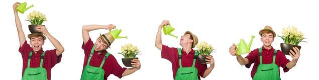 Le jeune jardinier avec la fleur et le pot d'isolement sur le blanc photos stock