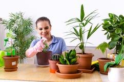 Le jeune jardinier f?minin avec des usines ? l'int?rieur images libres de droits