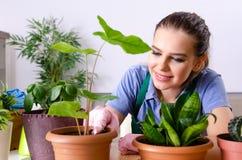 Le jeune jardinier f?minin avec des usines ? l'int?rieur image libre de droits