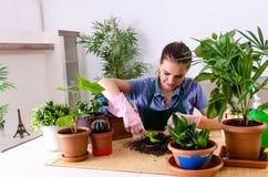 Le jeune jardinier f?minin avec des usines ? l'int?rieur photos stock