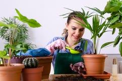 Le jeune jardinier f?minin avec des usines ? l'int?rieur image stock