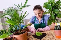 Le jeune jardinier f?minin avec des usines ? l'int?rieur photo stock