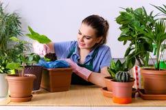 Le jeune jardinier f?minin avec des usines ? l'int?rieur photographie stock