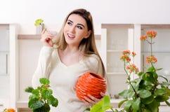 Le jeune jardinier f?minin avec des usines ? l'int?rieur photographie stock libre de droits