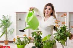 Le jeune jardinier f?minin avec des usines ? l'int?rieur images stock