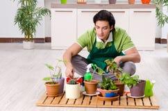 Le jeune jardinier masculin avec des usines ? l'int?rieur photos libres de droits