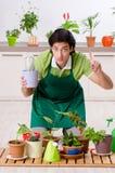 Le jeune jardinier masculin avec des usines ? l'int?rieur images libres de droits