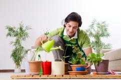 Le jeune jardinier masculin avec des usines ? l'int?rieur photographie stock libre de droits