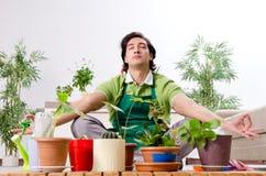 Le jeune jardinier masculin avec des usines ? l'int?rieur photographie stock
