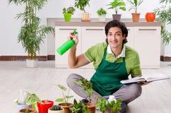 Le jeune jardinier masculin avec des usines ? l'int?rieur images stock