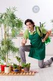 Le jeune jardinier masculin avec des usines ? l'int?rieur photo stock