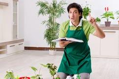 Le jeune jardinier masculin avec des usines ? l'int?rieur photo libre de droits