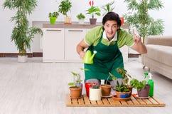 Le jeune jardinier masculin avec des usines ? l'int?rieur image stock