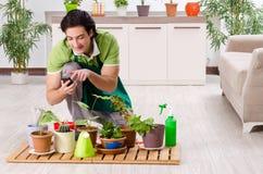 Le jeune jardinier masculin avec des usines ? l'int?rieur photos stock