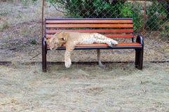 Le jeune lion Photos libres de droits