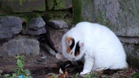 Le jeune minou est nettoyé après consommation clips vidéos