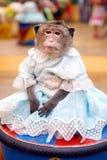 Le jeune singe d'ouistiti dans une robe bleue se repose sur la restriction Photo stock