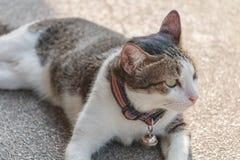 Le jeune sommeil de chat sur le plancher d'intérieur Image stock