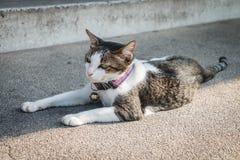 Le jeune sommeil de chat sur le plancher en béton Photos stock
