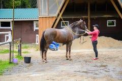 Le jockey lave le cheval avec de l'eau Photographie stock