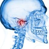 Le joint temporo-mandibulaire illustration libre de droits
