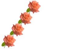 le jour de carte de fond enfante des roses Photo libre de droits