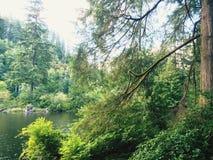 Le jour de lac Photographie stock libre de droits